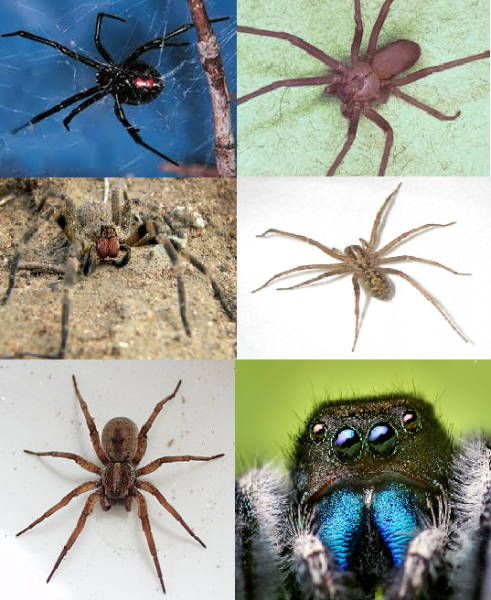 Treat spider bites immediately to avoid allergic reactions