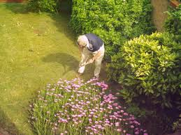 gardener-working-can-be-bitten-by-spiders